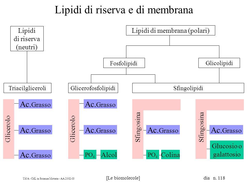 Ud'A - CdL in Scienze Motorie - AA 2002-03 [Le biomolecole] dia n. 118 Triacilgliceroli Lipidi di riserva e di membrana Lipidi di riserva (neutri) Lip