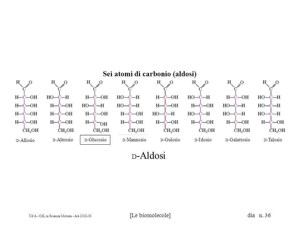 Ud'A - CdL in Scienze Motorie - AA 2002-03 [Le biomolecole] dia n. 36 D -Aldosi Sei atomi di carbonio (aldosi) D -Allosio D -Altrosio D -Glucosio D -M