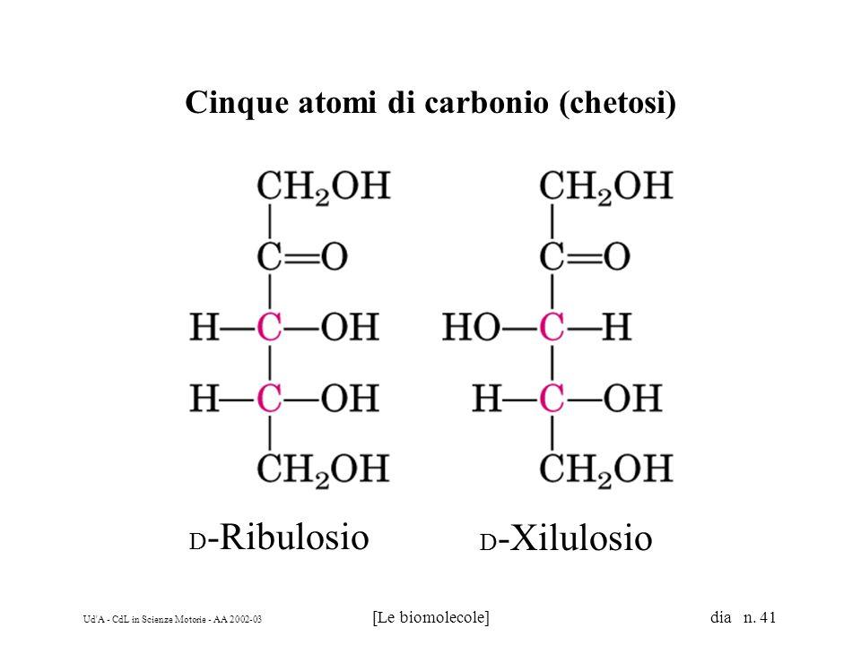 Ud'A - CdL in Scienze Motorie - AA 2002-03 [Le biomolecole] dia n. 41 Cinque atomi di carbonio (chetosi) D -Ribulosio D -Xilulosio