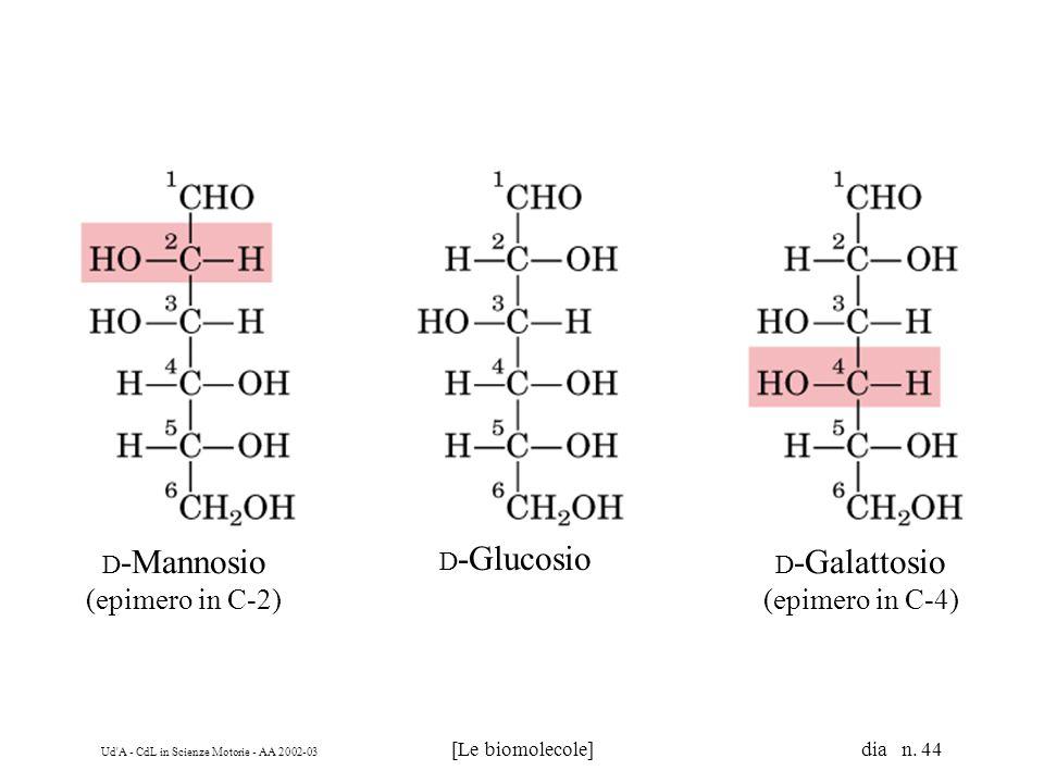 Ud'A - CdL in Scienze Motorie - AA 2002-03 [Le biomolecole] dia n. 44 D -Mannosio (epimero in C-2) D -Galattosio (epimero in C-4) D -Glucosio