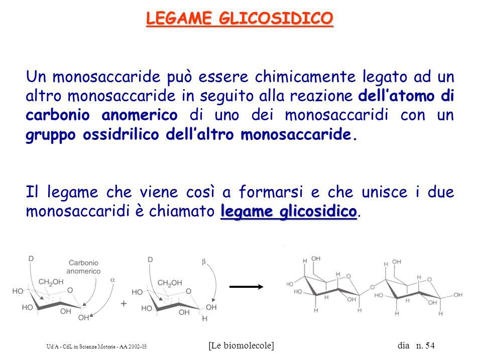 Ud'A - CdL in Scienze Motorie - AA 2002-03 [Le biomolecole] dia n. 54 LEGAME GLICOSIDICO Un monosaccaride può essere chimicamente legato ad un altro m
