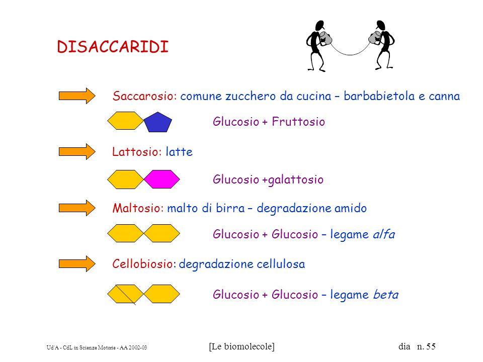 Ud'A - CdL in Scienze Motorie - AA 2002-03 [Le biomolecole] dia n. 55 DISACCARIDI Saccarosio: comune zucchero da cucina – barbabietola e canna Glucosi