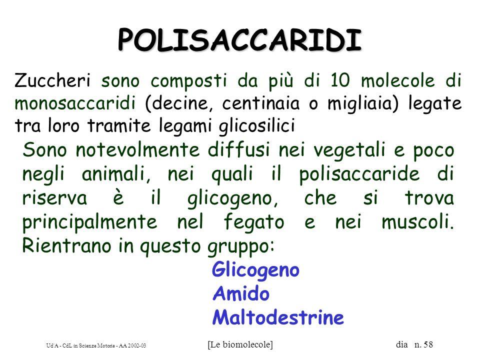 Ud'A - CdL in Scienze Motorie - AA 2002-03 [Le biomolecole] dia n. 58 POLISACCARIDI Zuccheri sono composti da più di 10 molecole di monosaccaridi (dec