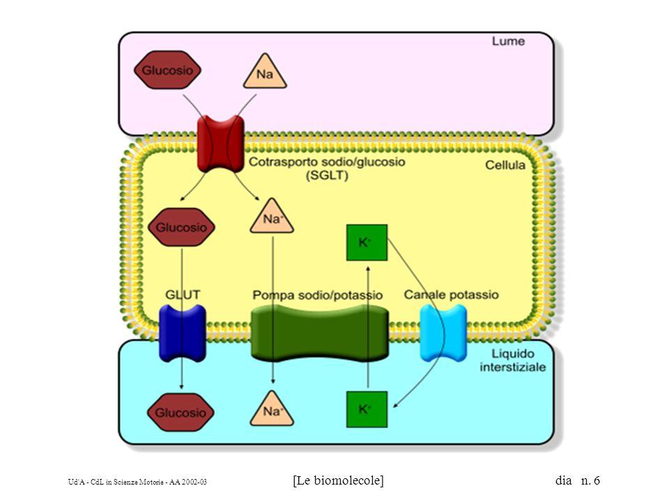 Ud'A - CdL in Scienze Motorie - AA 2002-03 [Le biomolecole] dia n. 6
