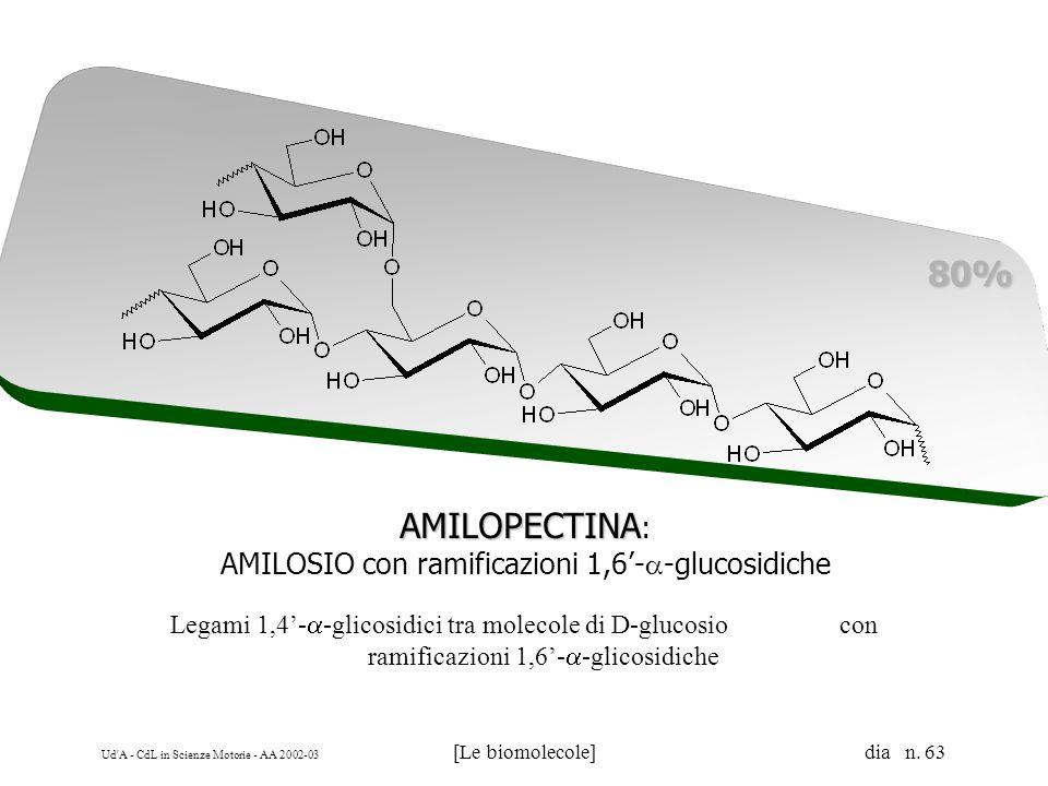 Ud'A - CdL in Scienze Motorie - AA 2002-03 [Le biomolecole] dia n. 63 AMILOPECTINA AMILOPECTINA : AMILOSIO con ramificazioni 1,6- -glucosidiche 80% Le
