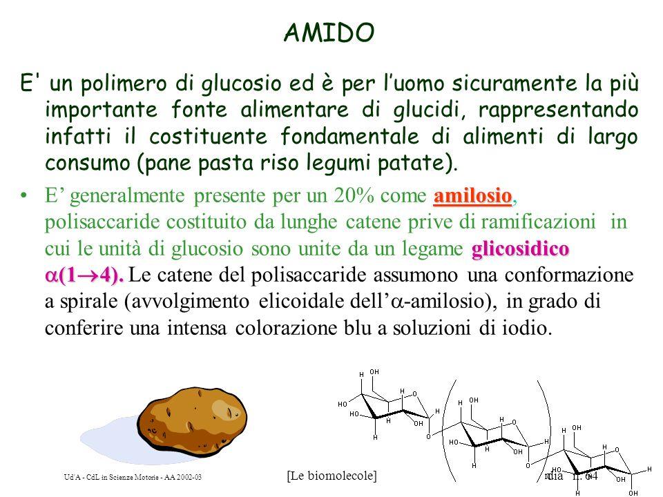 Ud'A - CdL in Scienze Motorie - AA 2002-03 [Le biomolecole] dia n. 64 AMIDO E' un polimero di glucosio ed è per luomo sicuramente la più importante fo