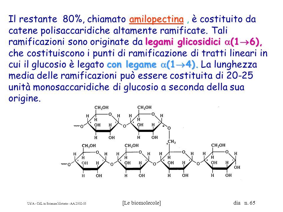 Ud'A - CdL in Scienze Motorie - AA 2002-03 [Le biomolecole] dia n. 65 amilopectina legami glicosidici (1 6), con legame (1 4). Il restante 80%, chiama