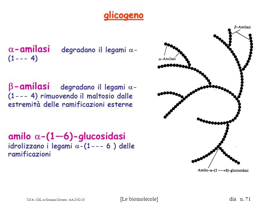Ud'A - CdL in Scienze Motorie - AA 2002-03 [Le biomolecole] dia n. 71 -amilasi degradano il legami - (1--- 4) -amilasi degradano il legami - (1--- 4)