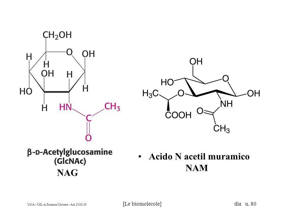Ud'A - CdL in Scienze Motorie - AA 2002-03 [Le biomolecole] dia n. 80 Acido N acetil muramico NAM NAG