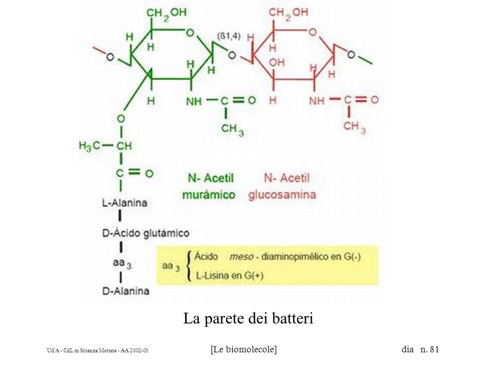 Ud'A - CdL in Scienze Motorie - AA 2002-03 [Le biomolecole] dia n. 81 La parete dei batteri