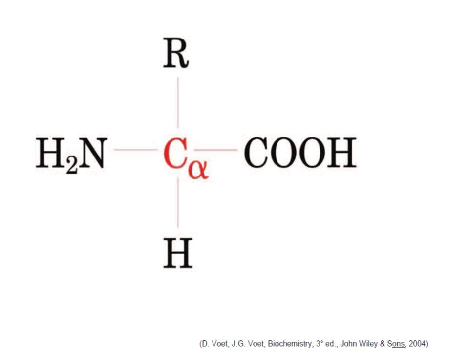Ud'A - CdL in Scienze Motorie - AA 2002-03 [Le biomolecole] dia n. 85