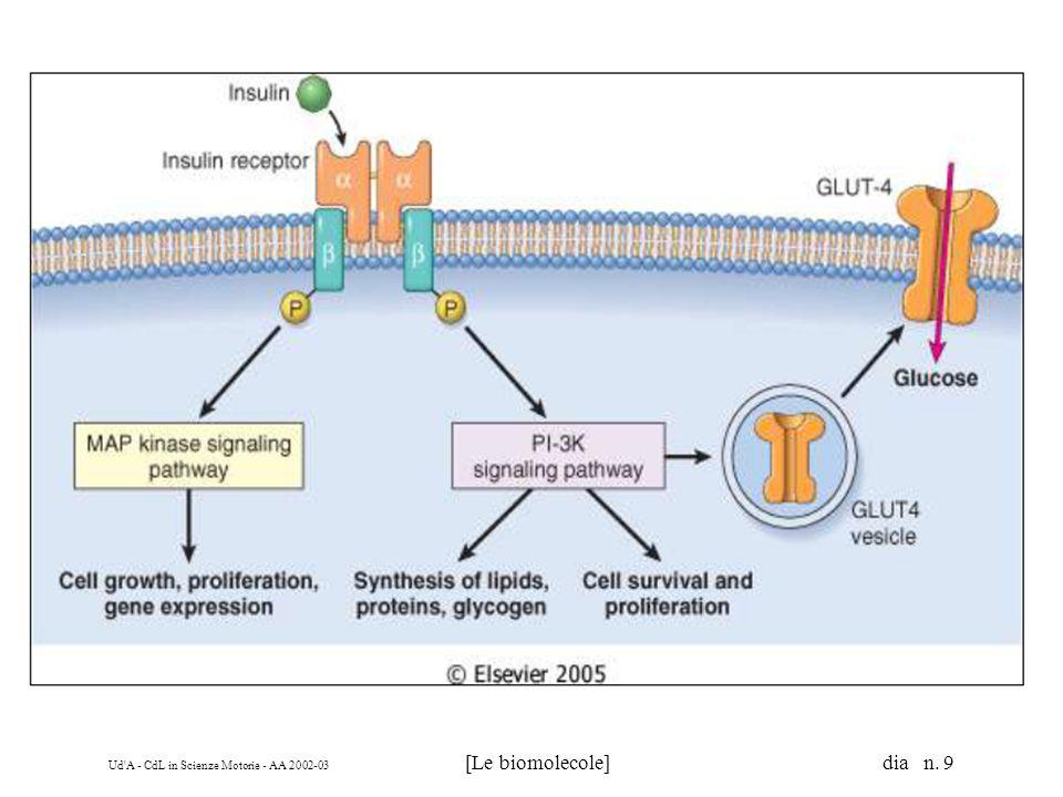 Ud A - CdL in Scienze Motorie - AA 2002-03 [Le biomolecole] dia n. 110 I lipidi