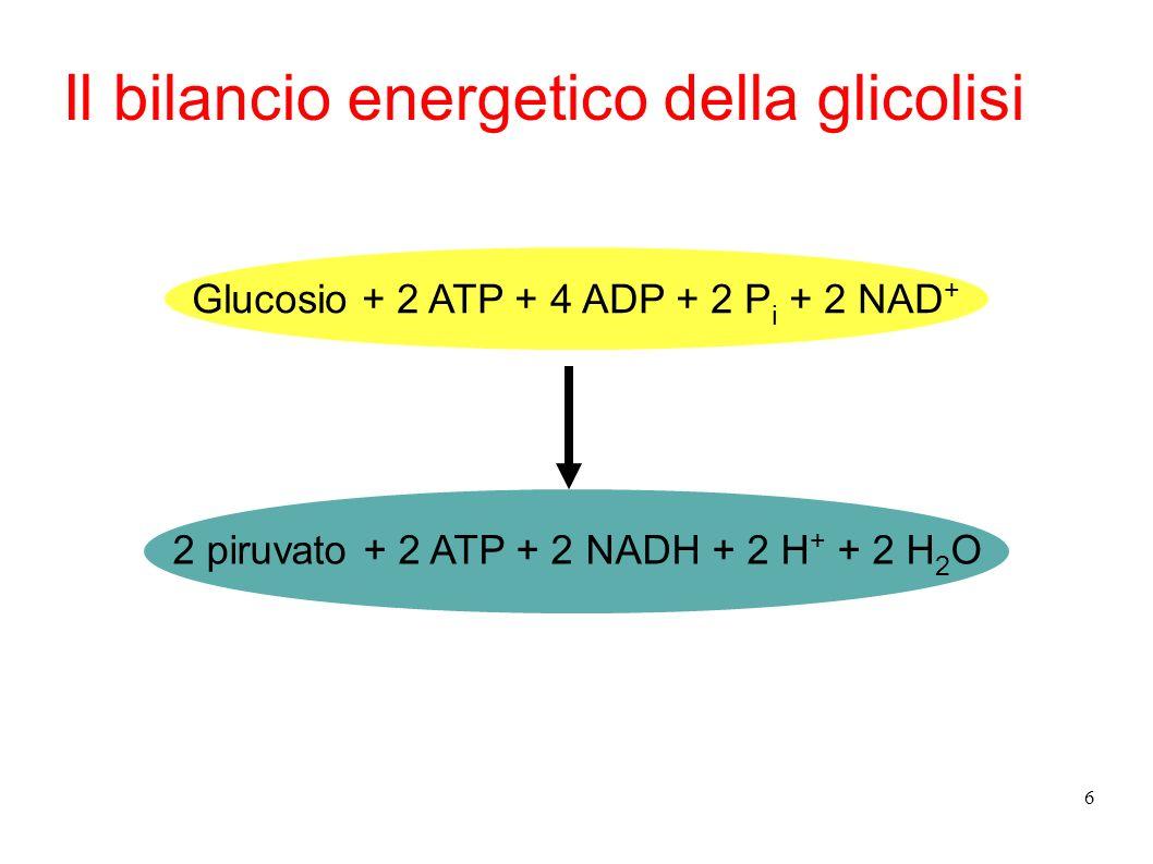 6 Glucosio + 2 ATP + 4 ADP + 2 P i + 2 NAD + 2 piruvato + 2 ATP + 2 NADH + 2 H + + 2 H 2 O Il bilancio energetico della glicolisi