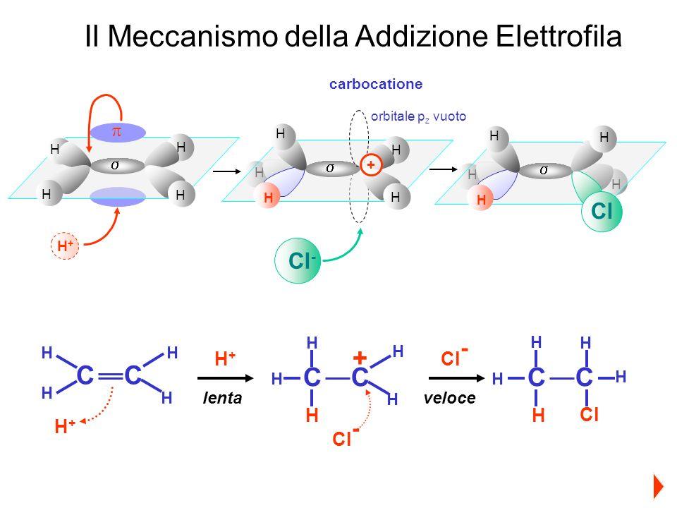 H H H H H H H H H + H H H H H H H Cl H+H+ Cl - orbitale p z vuoto carbocatione Il Meccanismo della Addizione Elettrofila CC CCCC H+H+ + H H+H+ Cl - Cl H Cl - lentaveloce H H H H H H H H H H H H