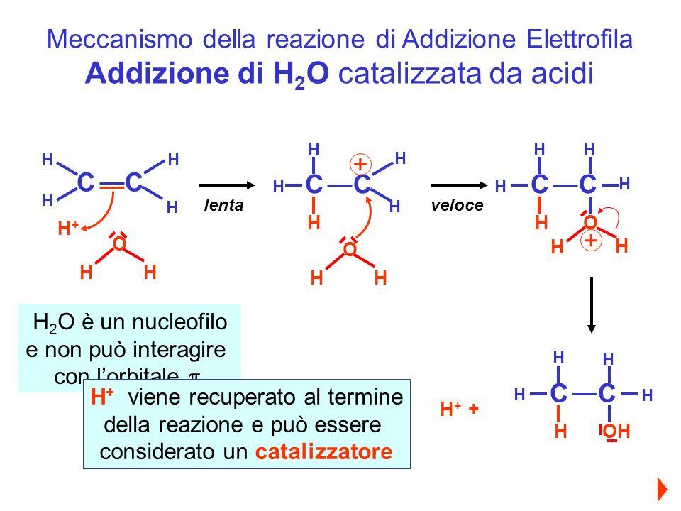 Meccanismo della reazione di Addizione Elettrofila Addizione di H 2 O catalizzata da acidi CC H+H+ H H H H O H H H + + H CC lenta H H H H + CC H veloce H H H H O H H + O H H H 2 O è un nucleofilo e non può interagire con lorbitale H + viene recuperato al termine della reazione e può essere considerato un catalizzatore CC H H H H H OH