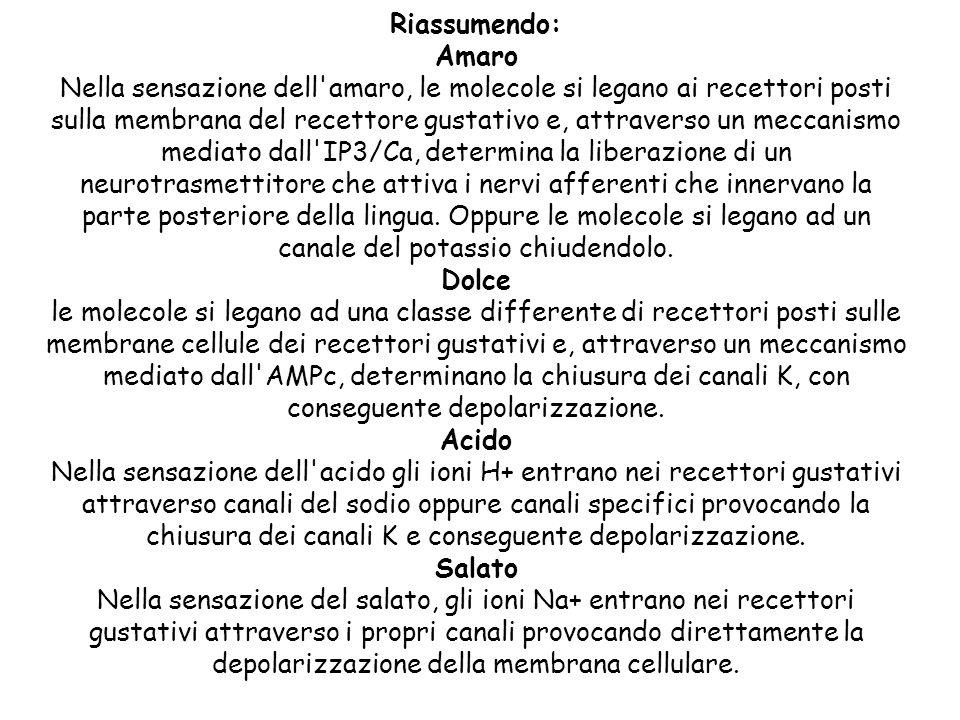 Riassumendo: Amaro Nella sensazione dell'amaro, le molecole si legano ai recettori posti sulla membrana del recettore gustativo e, attraverso un mecca