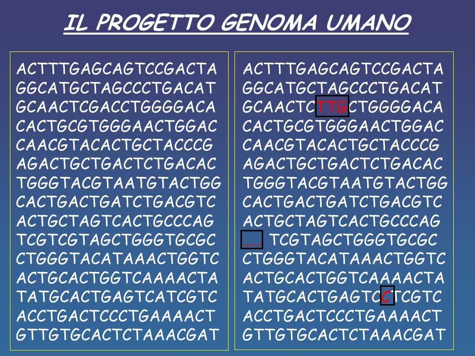 IL PROGETTO GENOMA UMANO ACTTTGAGCAGTCCGACTA GGCATGCTAGCCCTGACAT GCAACTCGACCTGGGGACA CACTGCGTGGGAACTGGAC CAACGTACACTGCTACCCG AGACTGCTGACTCTGACAC TGGGTACGTAATGTACTGG CACTGACTGATCTGACGTC ACTGCTAGTCACTGCCCAG TCGTCGTAGCTGGGTGCGC CTGGGTACATAAACTGGTC ACTGCACTGGTCAAAACTA TATGCACTGAGTCATCGTC ACCTGACTCCCTGAAAACT GTTGTGCACTCTAAACGAT ACTTTGAGCAGTCCGACTA GGCATGCTAGCCCTGACAT GCAACTCTTGCTGGGGACA CACTGCGTGGGAACTGGAC CAACGTACACTGCTACCCG AGACTGCTGACTCTGACAC TGGGTACGTAATGTACTGG CACTGACTGATCTGACGTC ACTGCTAGTCACTGCCCAG …… TCGTAGCTGGGTGCGC CTGGGTACATAAACTGGTC ACTGCACTGGTCAAAACTA TATGCACTGAGTCCTCGTC ACCTGACTCCCTGAAAACT GTTGTGCACTCTAAACGAT
