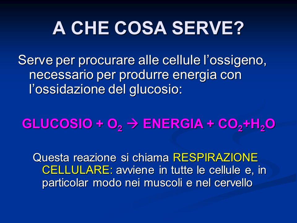 A CHE COSA SERVE? Serve per procurare alle cellule lossigeno, necessario per produrre energia con lossidazione del glucosio: GLUCOSIO + O 2 ENERGIA +