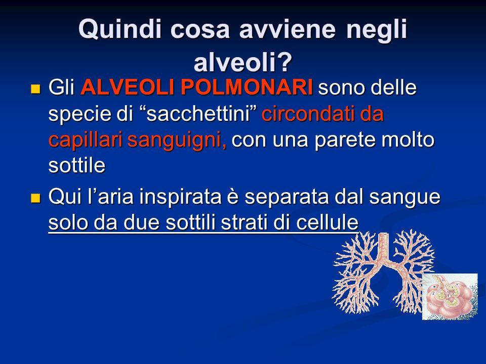 Quindi cosa avviene negli alveoli.