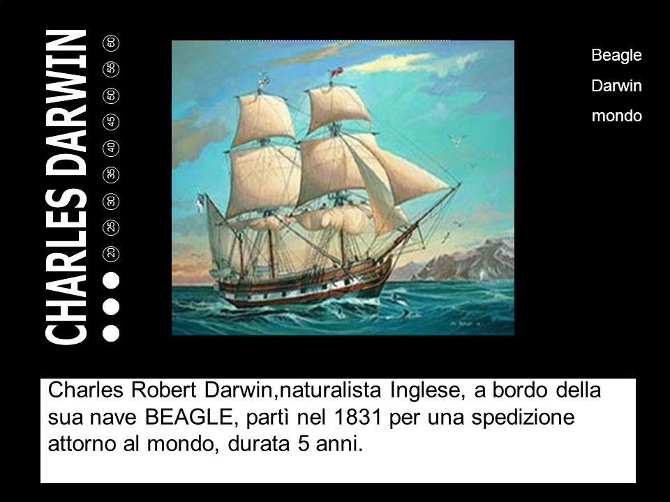 5 10 15 20 25 30 35 40 45 50 55 60 Charles Robert Darwin,naturalista Inglese, a bordo della sua nave BEAGLE, partì nel 1831 per una spedizione attorno al mondo, durata 5 anni.
