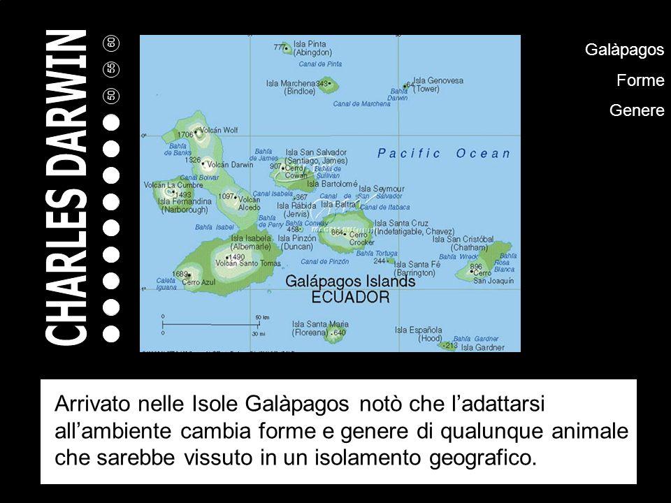Galàpagos Forme Genere Arrivato nelle Isole Galàpagos notò che ladattarsi allambiente cambia forme e genere di qualunque animale che sarebbe vissuto in un isolamento geografico.