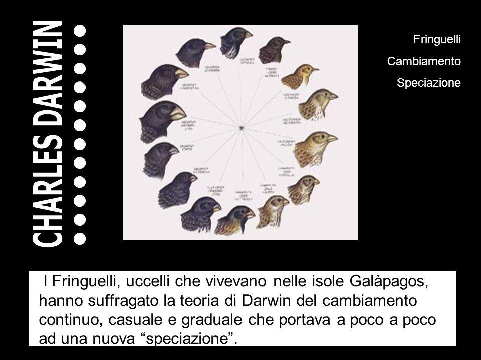 5 10 15 20 25 30 35 40 45 50 55 60 Fringuelli Cambiamento Speciazione I Fringuelli, uccelli che vivevano nelle isole Galàpagos, hanno suffragato la teoria di Darwin del cambiamento continuo, casuale e graduale che portava a poco a poco ad una nuova speciazione.