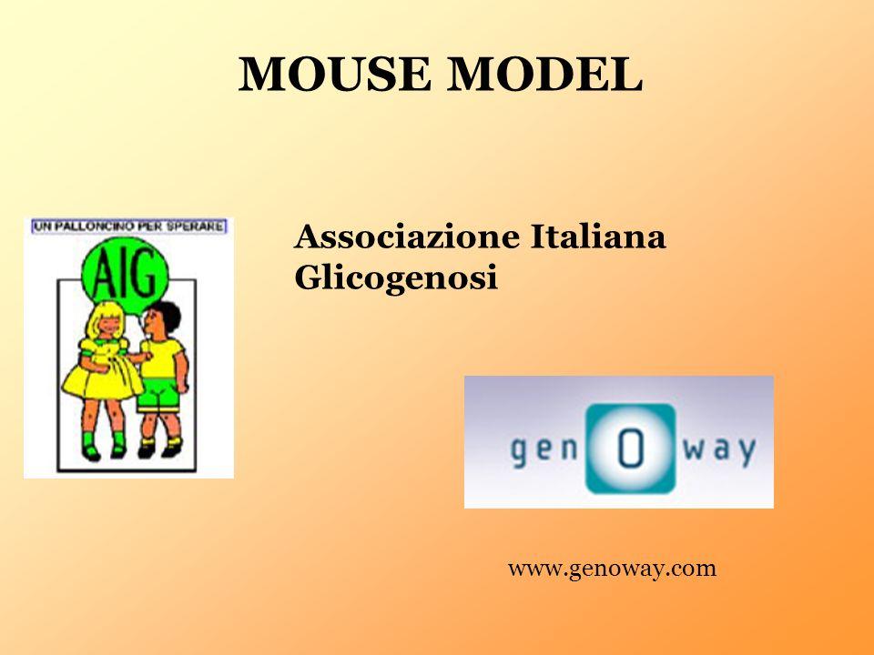 MOUSE MODEL Associazione Italiana Glicogenosi www.genoway.com