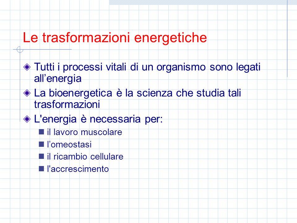 Le trasformazioni energetiche Tutti i processi vitali di un organismo sono legati allenergia La bioenergetica è la scienza che studia tali trasformazi