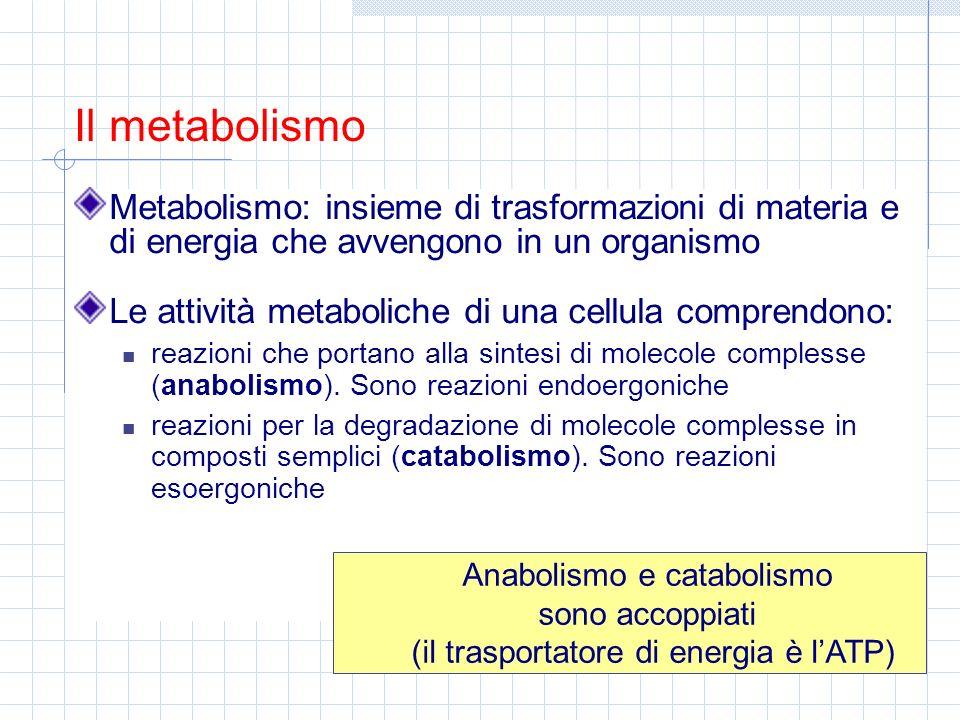 Metabolismo: insieme di trasformazioni di materia e di energia che avvengono in un organismo Le attività metaboliche di una cellula comprendono: reazi