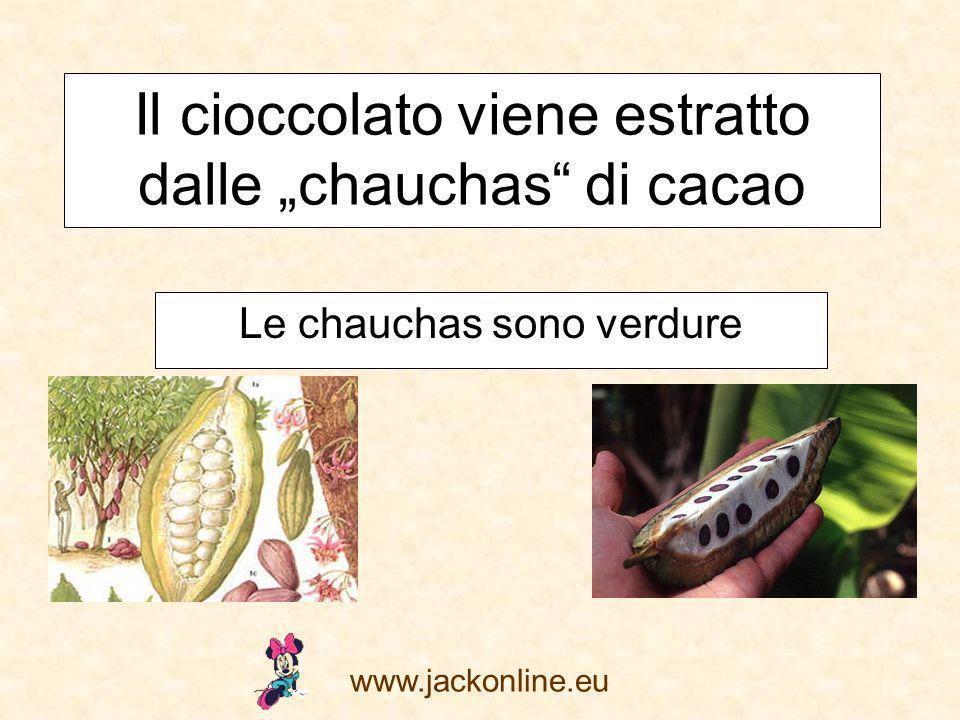 www.jackonline.eu Il cioccolato viene estratto dalle chauchas di cacao Le chauchas sono verdure