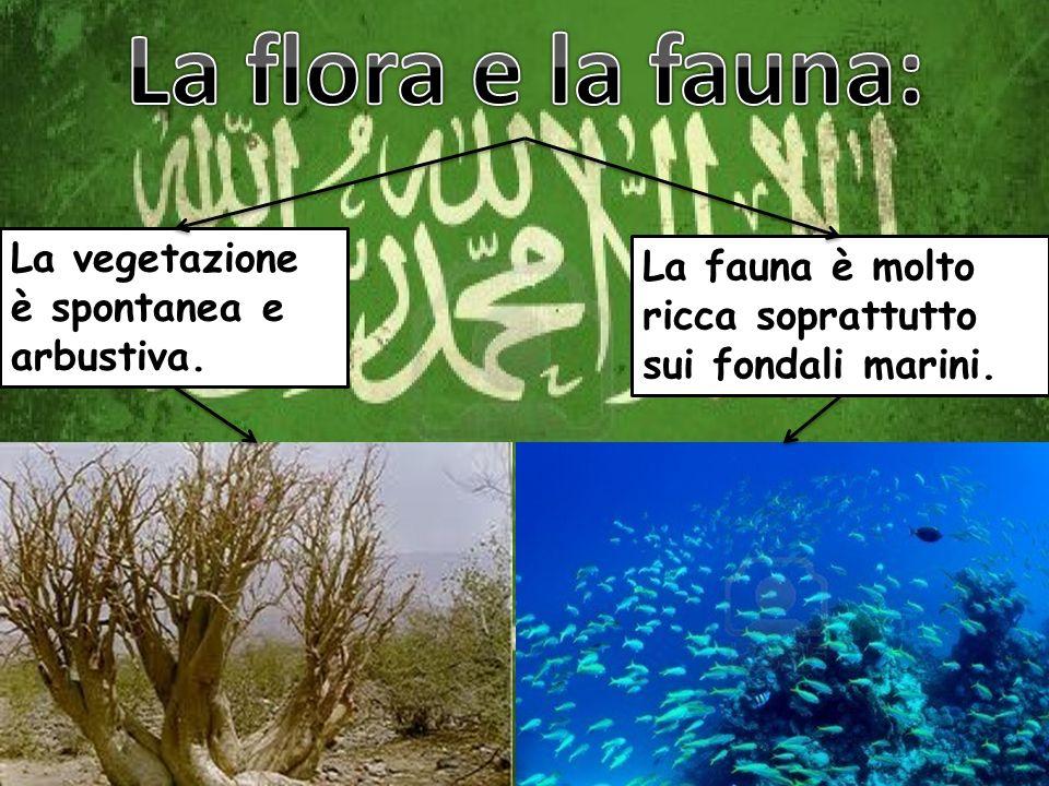 La vegetazione è spontanea e arbustiva. La fauna è molto ricca soprattutto sui fondali marini.