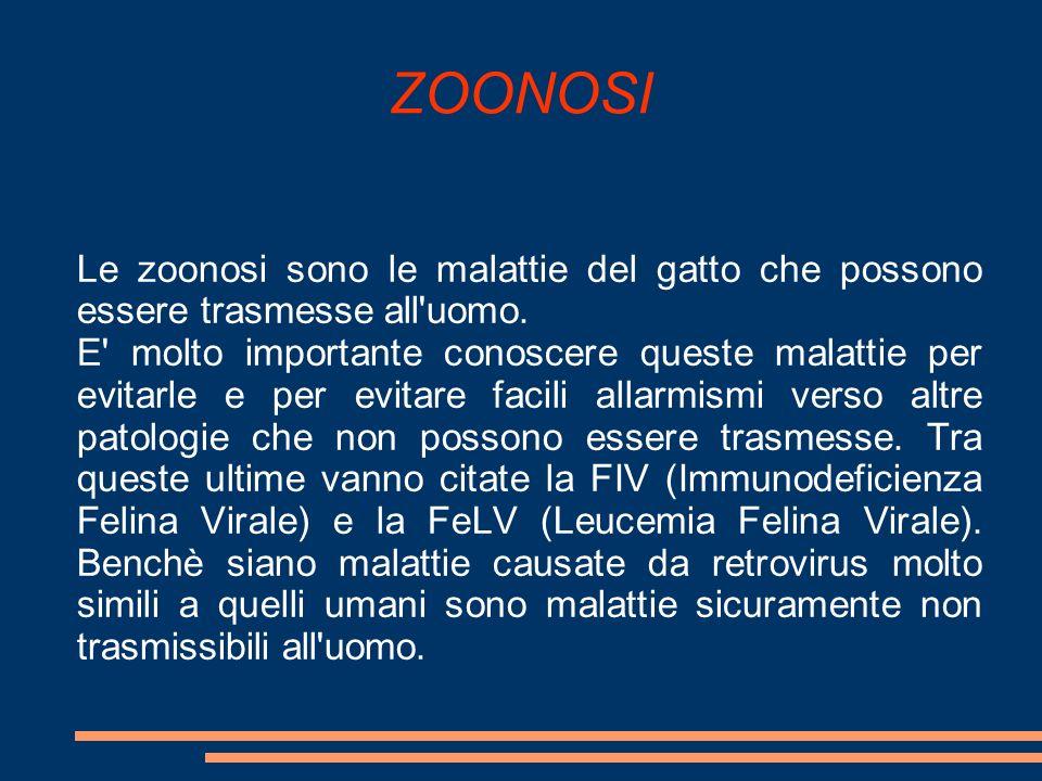 Le zoonosi sono le malattie del gatto che possono essere trasmesse all'uomo. E' molto importante conoscere queste malattie per evitarle e per evitare