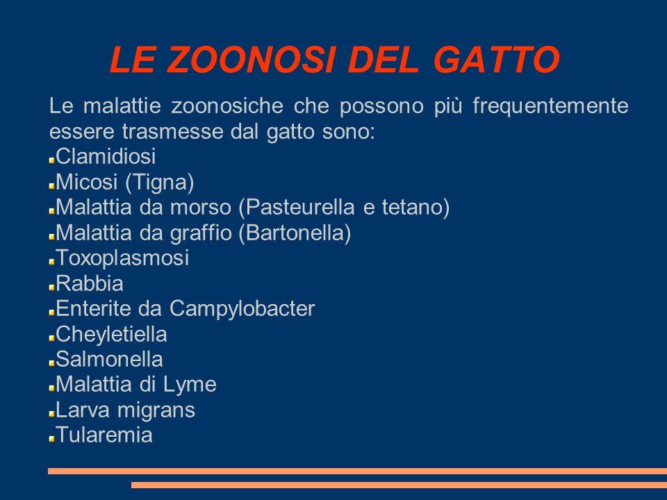 LE ZOONOSI DEL GATTO Le malattie zoonosiche che possono più frequentemente essere trasmesse dal gatto sono: Clamidiosi Micosi (Tigna) Malattia da mors