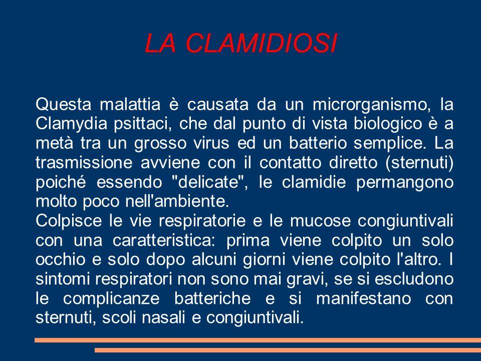 LA CLAMIDIOSI Questa malattia è causata da un microrganismo, la Clamydia psittaci, che dal punto di vista biologico è a metà tra un grosso virus ed un