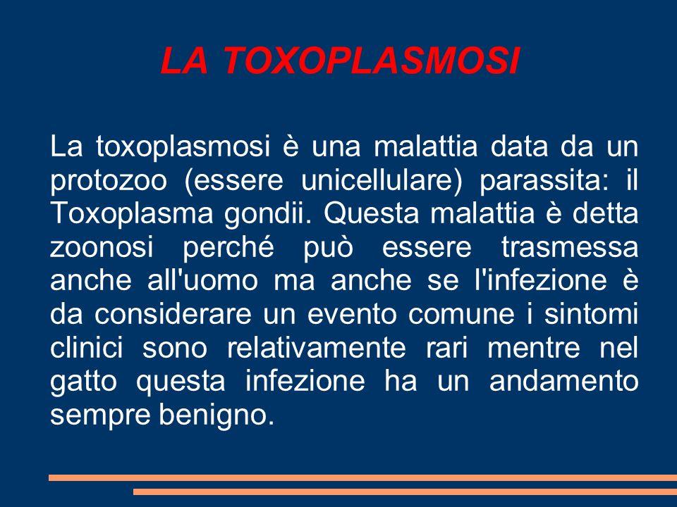 LA TOXOPLASMOSI La toxoplasmosi è una malattia data da un protozoo (essere unicellulare) parassita: il Toxoplasma gondii. Questa malattia è detta zoon
