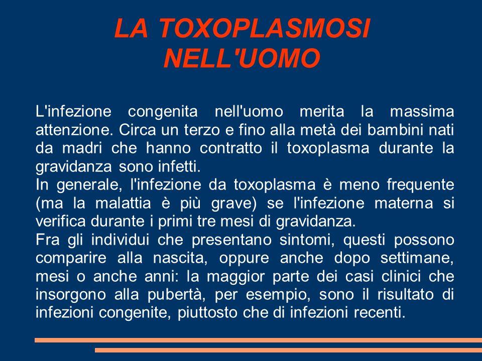 LA TOXOPLASMOSI NELL'UOMO L'infezione congenita nell'uomo merita la massima attenzione. Circa un terzo e fino alla metà dei bambini nati da madri che