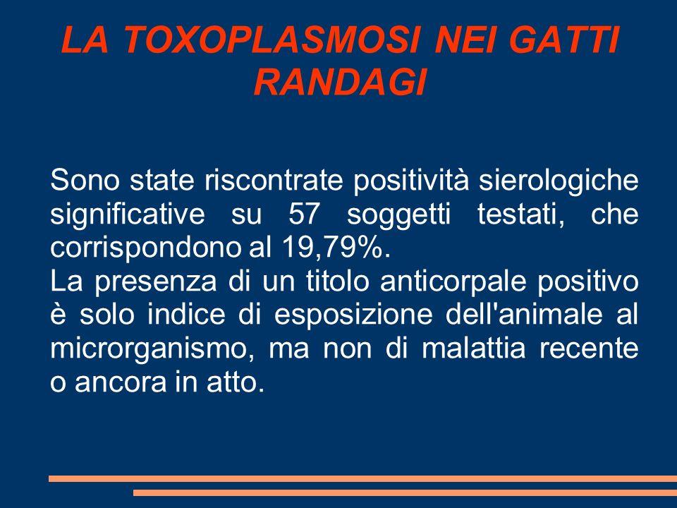 LA TOXOPLASMOSI NEI GATTI RANDAGI Sono state riscontrate positività sierologiche significative su 57 soggetti testati, che corrispondono al 19,79%. La
