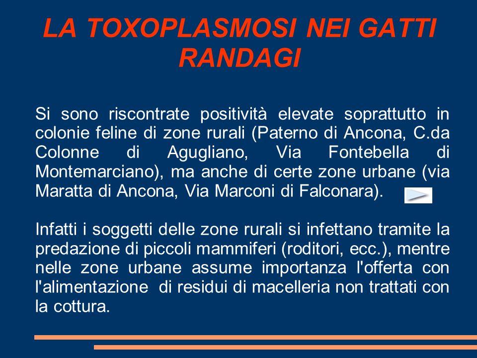 LA TOXOPLASMOSI NEI GATTI RANDAGI Si sono riscontrate positività elevate soprattutto in colonie feline di zone rurali (Paterno di Ancona, C.da Colonne