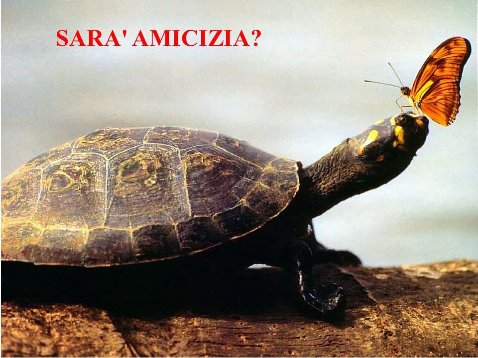 SARA' AMICIZIA?