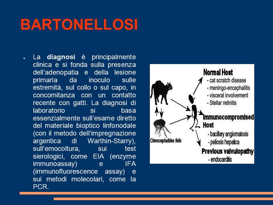 BARTONELLOSI La diagnosi è principalmente clinica e si fonda sulla presenza delladenopatia e della lesione primaria da inoculo sulle estremità, sul co