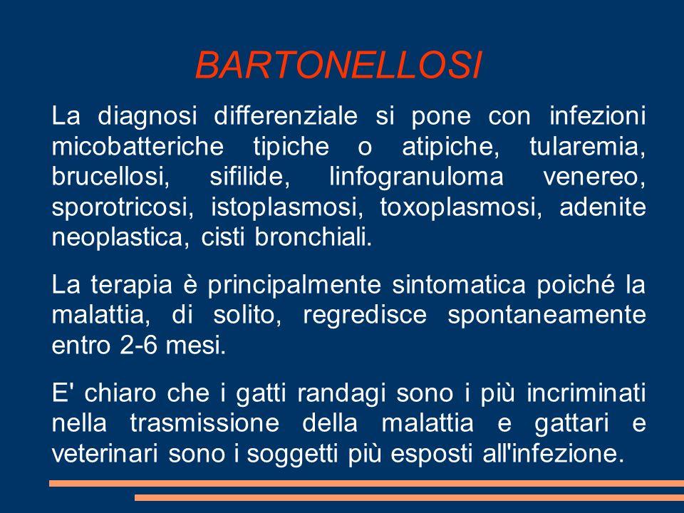 BARTONELLOSI La diagnosi differenziale si pone con infezioni micobatteriche tipiche o atipiche, tularemia, brucellosi, sifilide, linfogranuloma venere