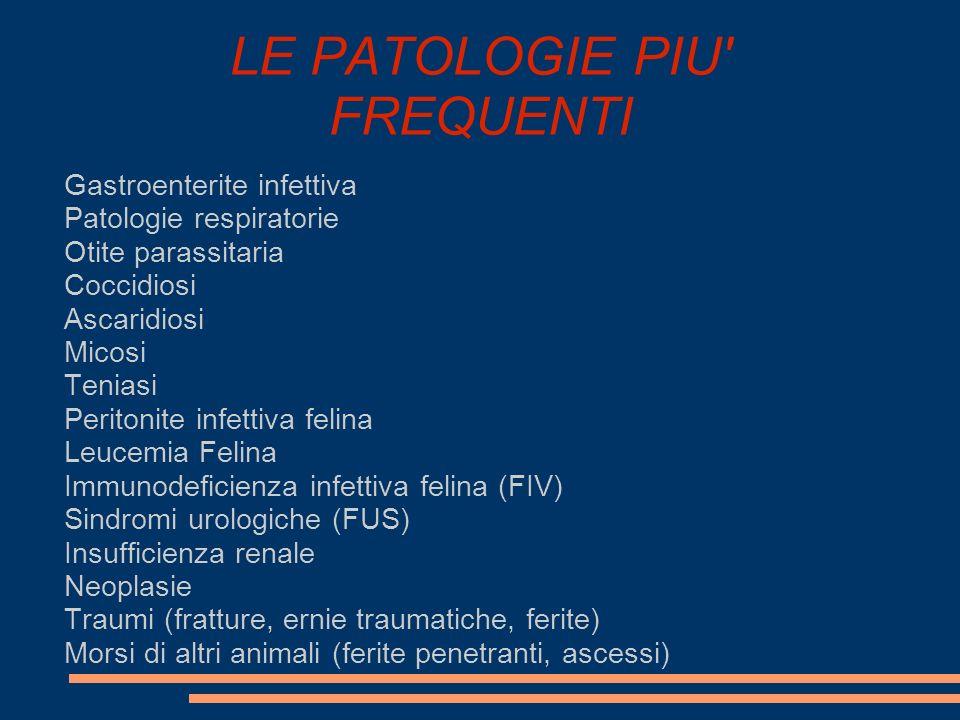 LE PATOLOGIE PIU' FREQUENTI Gastroenterite infettiva Patologie respiratorie Otite parassitaria Coccidiosi Ascaridiosi Micosi Teniasi Peritonite infett