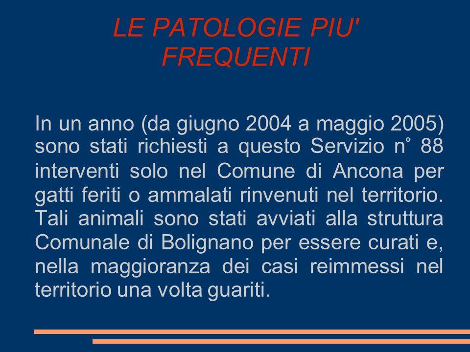 LE PATOLOGIE PIU' FREQUENTI In un anno (da giugno 2004 a maggio 2005) sono stati richiesti a questo Servizio n° 88 interventi solo nel Comune di Ancon