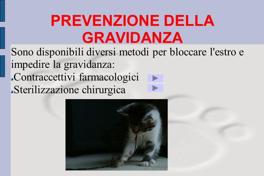 PREVENZIONE DELLA GRAVIDANZA Sono disponibili diversi metodi per bloccare l'estro e impedire la gravidanza: Contraccettivi farmacologici Sterilizzazio