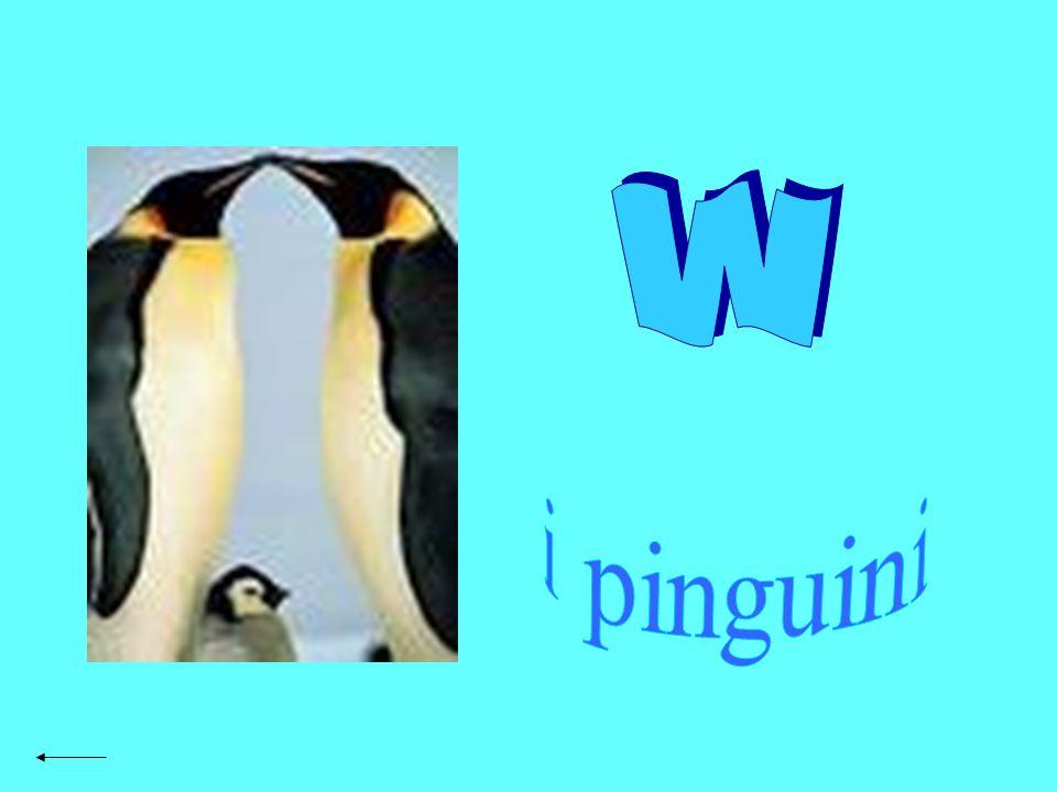 Pag. 2 w i pinguini Pag. 3 introduzione Pag. 4 caratteristiche fisiche Pag. 5 comportamento Pag. 6 riproduzione Pag. 7 cure parentali