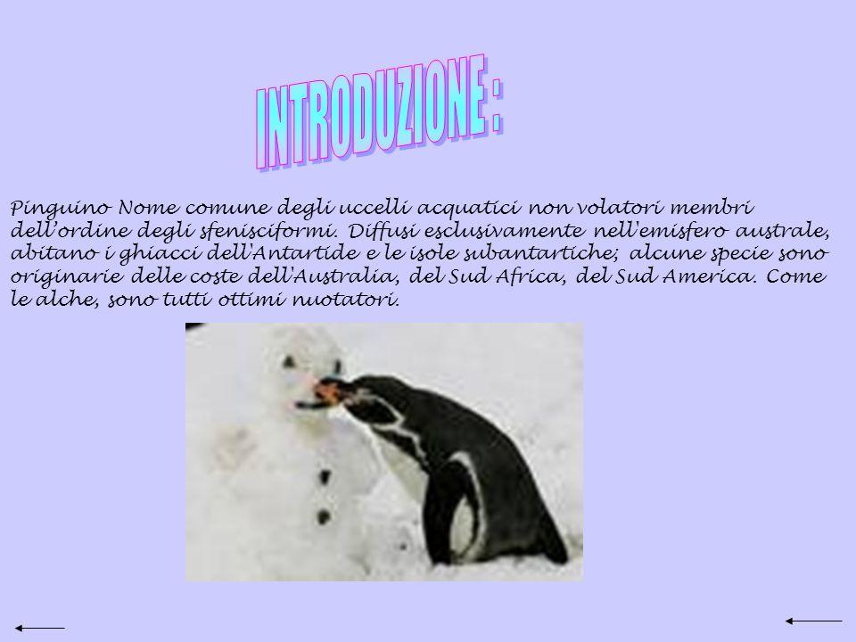 Pinguino Nome comune degli uccelli acquatici non volatori membri dellordine degli sfenisciformi.