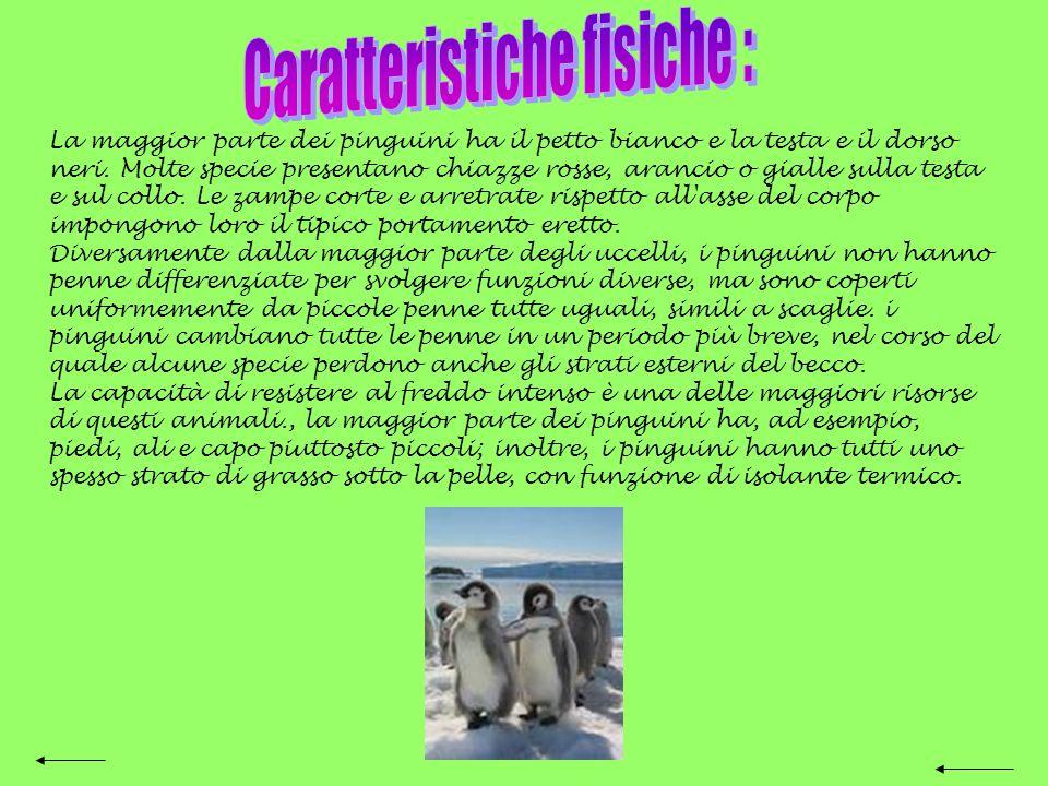 Pinguino Nome comune degli uccelli acquatici non volatori membri dellordine degli sfenisciformi. Diffusi esclusivamente nell'emisfero australe, abitan
