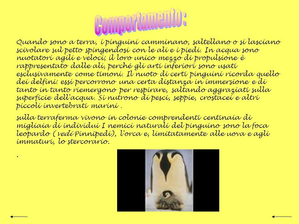 La maggior parte dei pinguini ha il petto bianco e la testa e il dorso neri. Molte specie presentano chiazze rosse, arancio o gialle sulla testa e sul