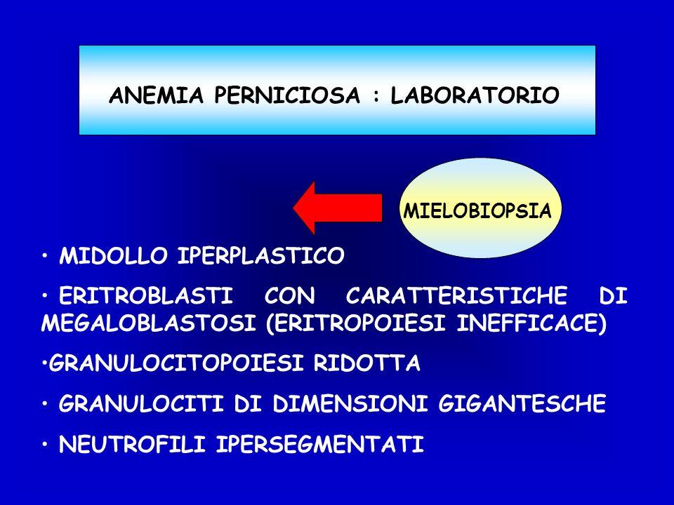 MIDOLLO IPERPLASTICO ERITROBLASTI CON CARATTERISTICHE DI MEGALOBLASTOSI (ERITROPOIESI INEFFICACE) GRANULOCITOPOIESI RIDOTTA GRANULOCITI DI DIMENSIONI GIGANTESCHE NEUTROFILI IPERSEGMENTATI ANEMIA PERNICIOSA : LABORATORIO MIELOBIOPSIA