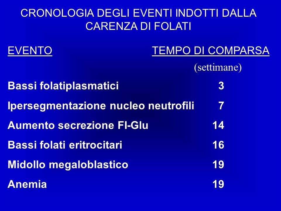 CRONOLOGIA DEGLI EVENTI INDOTTI DALLA CARENZA DI FOLATI EVENTO Bassi folatiplasmatici Ipersegmentazione nucleo neutrofili Aumento secrezione FI-Glu Bassi folati eritrocitari Midollo megaloblastico Anemia TEMPO DI COMPARSA 3 7 14 16 19 (settimane)